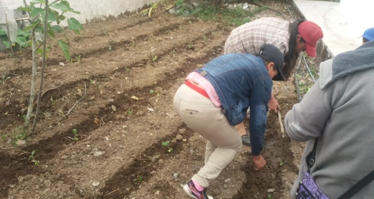 ENTREGA DE PLANTAS Y SEMILLAS PROYECTO HORTICOLA A LAS DIFERENTES COMUNIDADES DE LA PARROQUIA.
